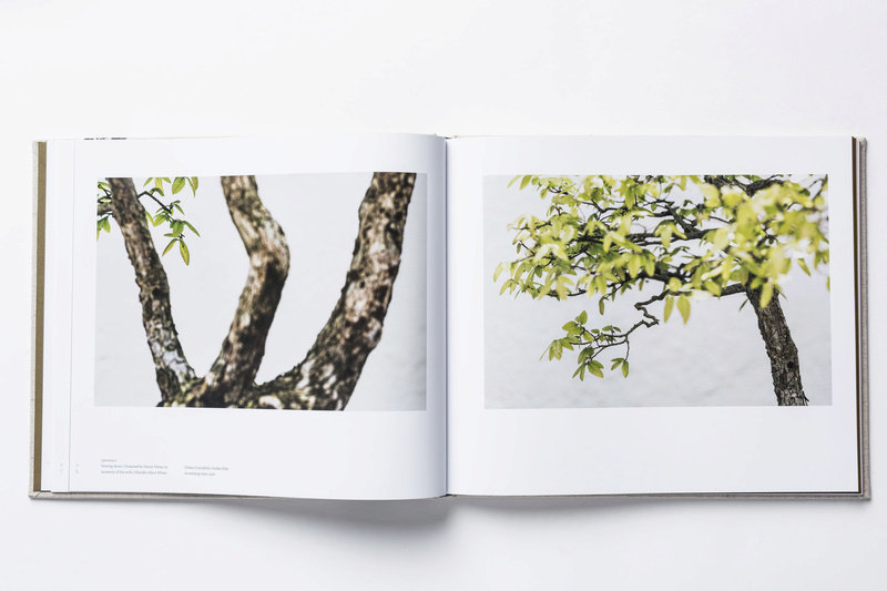 In Training, a new book of bonsai photos, out now (and discounted on Amazon) Intrai12