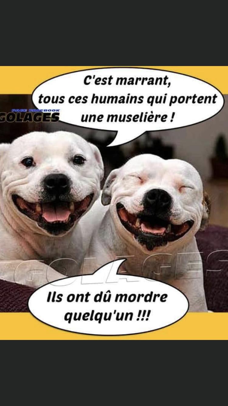 humour Img_5011