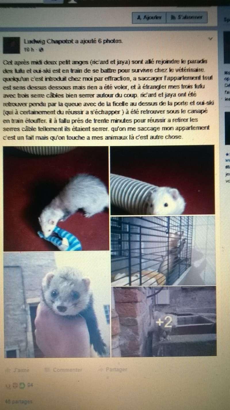 une horreur !!!!!!!! Wp_20113