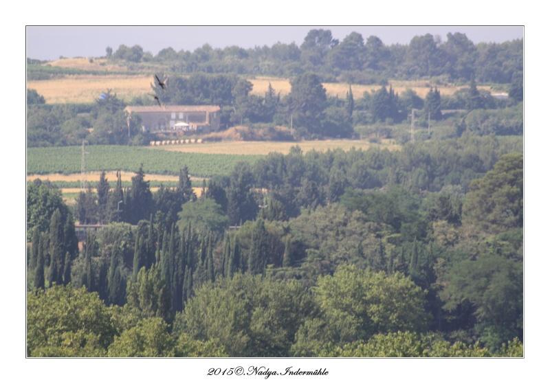 Carcassonne, et sa cité Cadre110