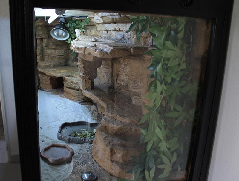 Tutoriel: construire son terrarium comme un pro! Commen14