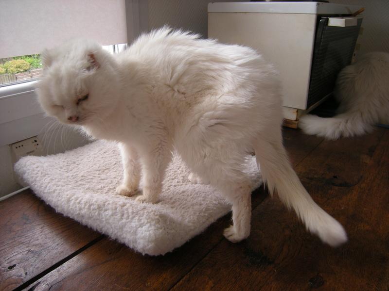 Etat du bassin d'un chat IRC 20210