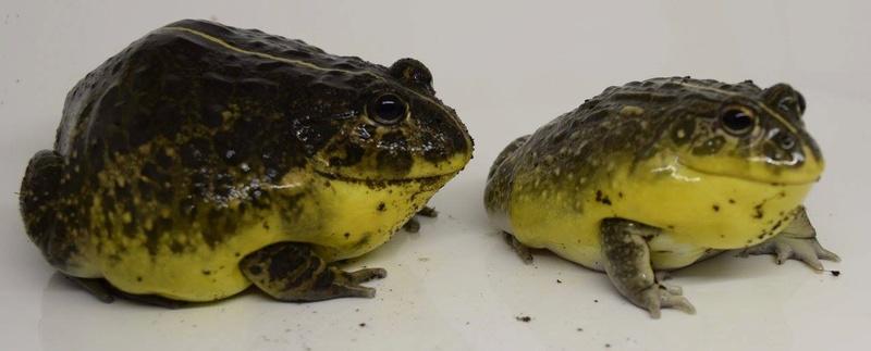 Mes grenouilles !  Image15