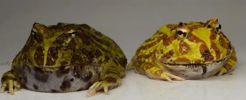 Mes grenouilles !  Image17