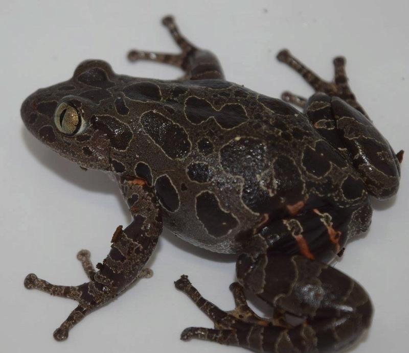 Mes grenouilles !  Image18