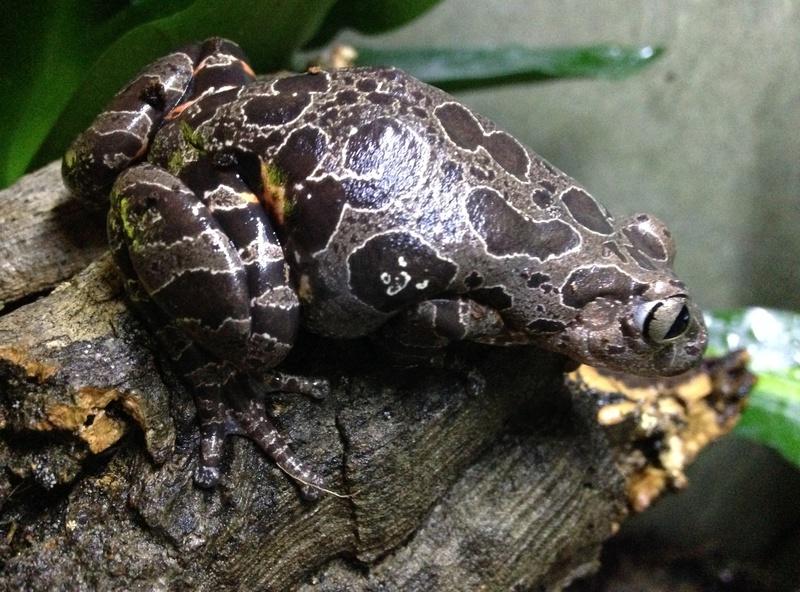 Mes grenouilles !  Image22