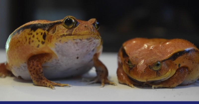 Mes grenouilles !  Image24
