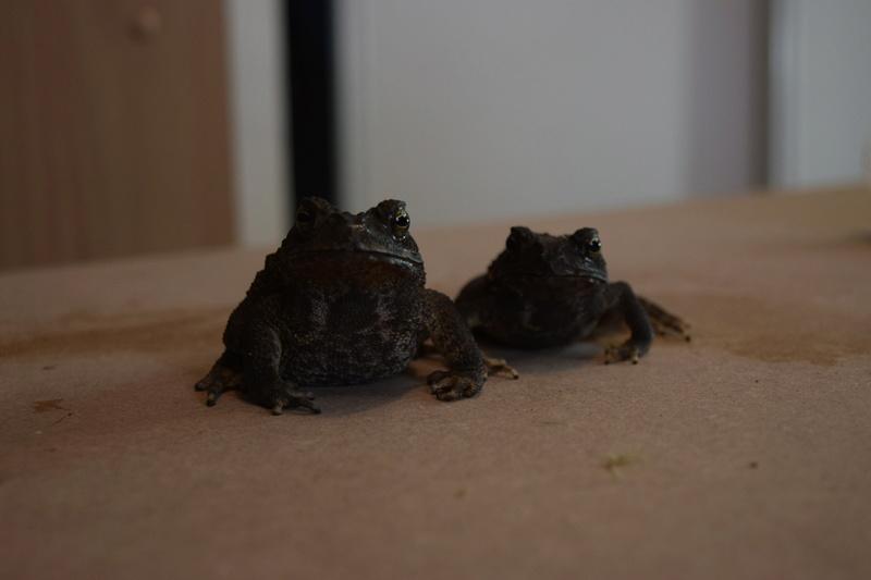 Mes grenouilles !  Image27