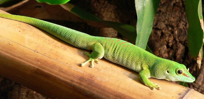 Projet gecko n°2 1200px10