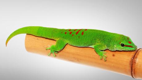 Projet gecko n°2 Phelsu10