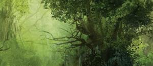 Forêts d'Émeraude