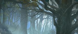 Profondeurs de la Forêt