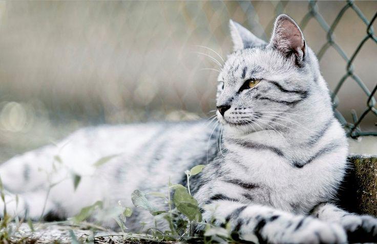 Présentation d'un chat à l'existence brisé [EN COUR] Flocon10