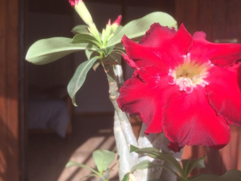 Les Plantes de Galatéa Img_0113
