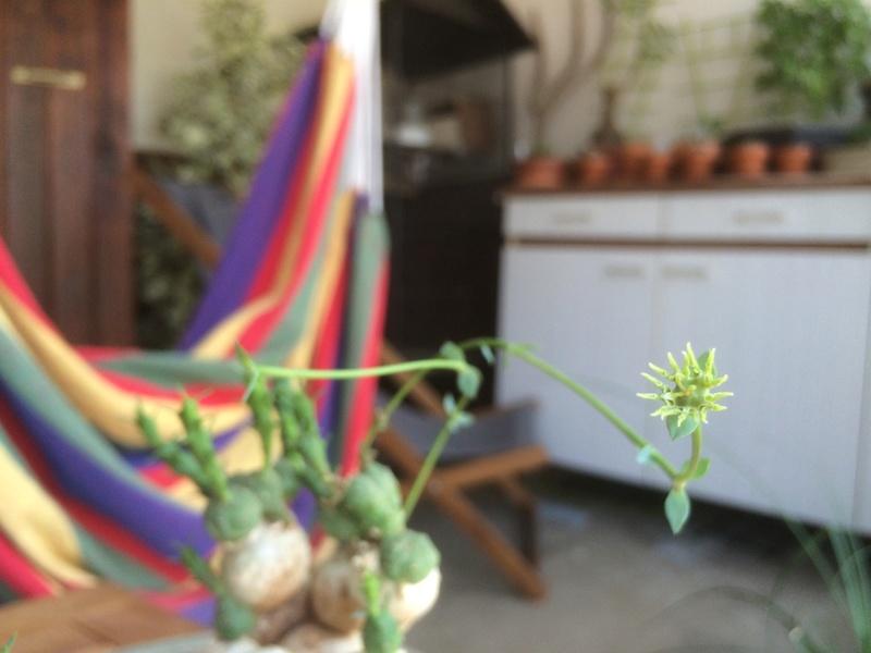 Les Plantes de Galatéa Img_0415