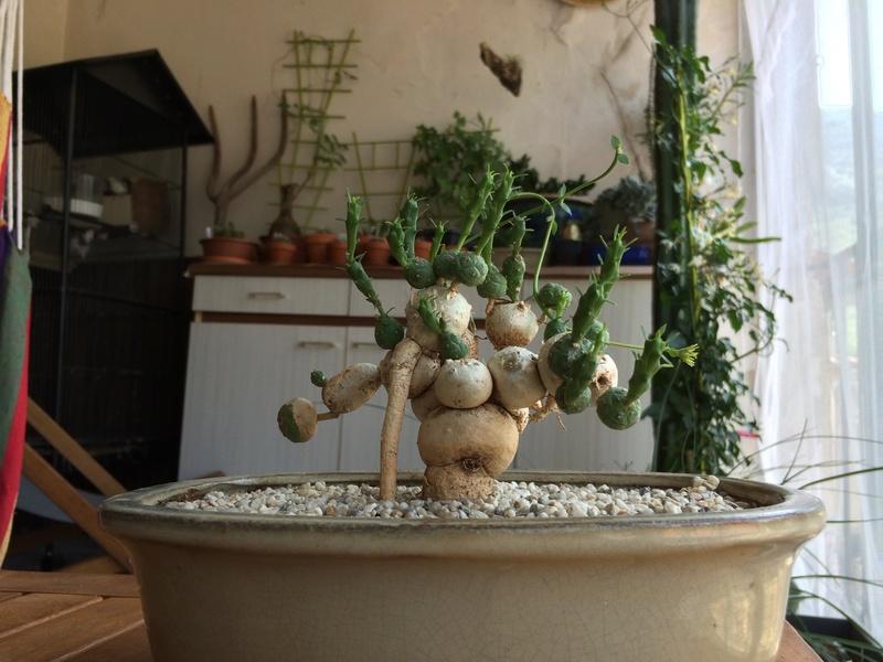 Les Plantes de Galatéa Img_0416