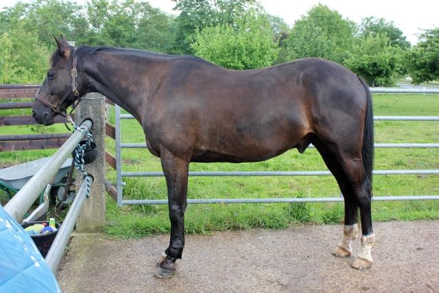 On juge vos chevaux au modèle - Page 5 Img_3810