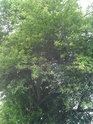 IDENTIFICATION D'UNE PLANTE Img_2030