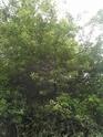 IDENTIFICATION D'UNE PLANTE Img_2032