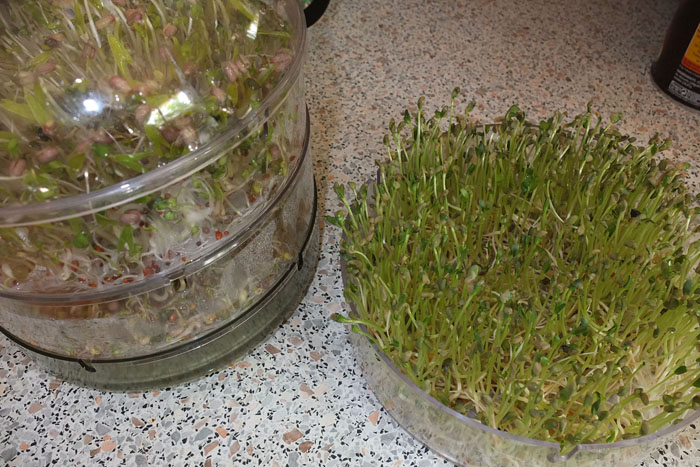 Les graines germées pour les nuls Popote16