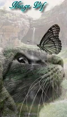 Mini Kit Cat Mag #3 Five10