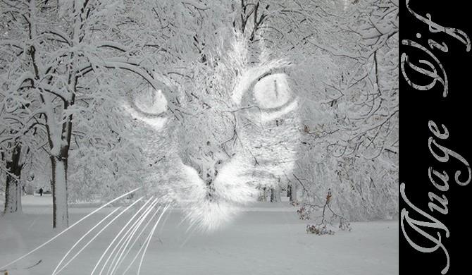 Mini Kit Cat Mag #3 Signa_10