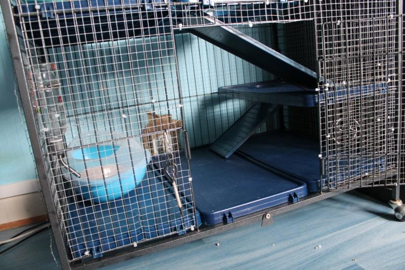 Réparer un bac de cage en plastique? Img_3812