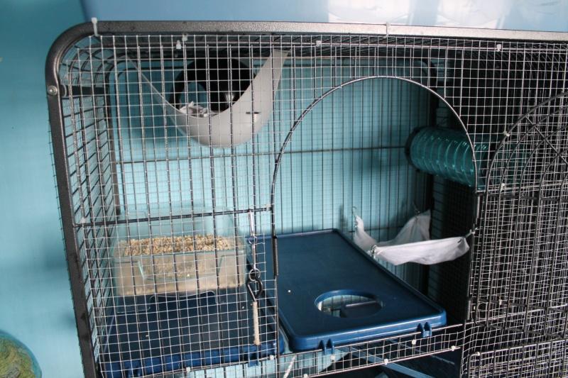 Réparer un bac de cage en plastique? Img_3815