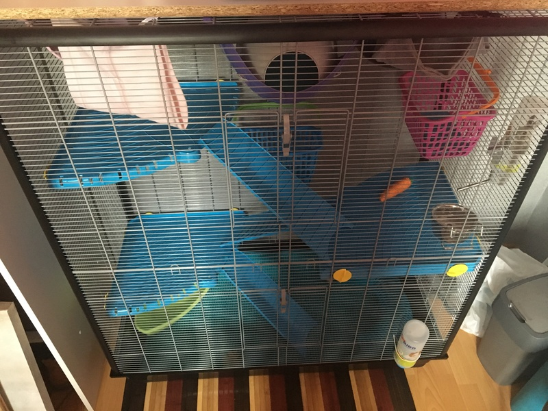 Photos de vos cages - Page 6 Image38