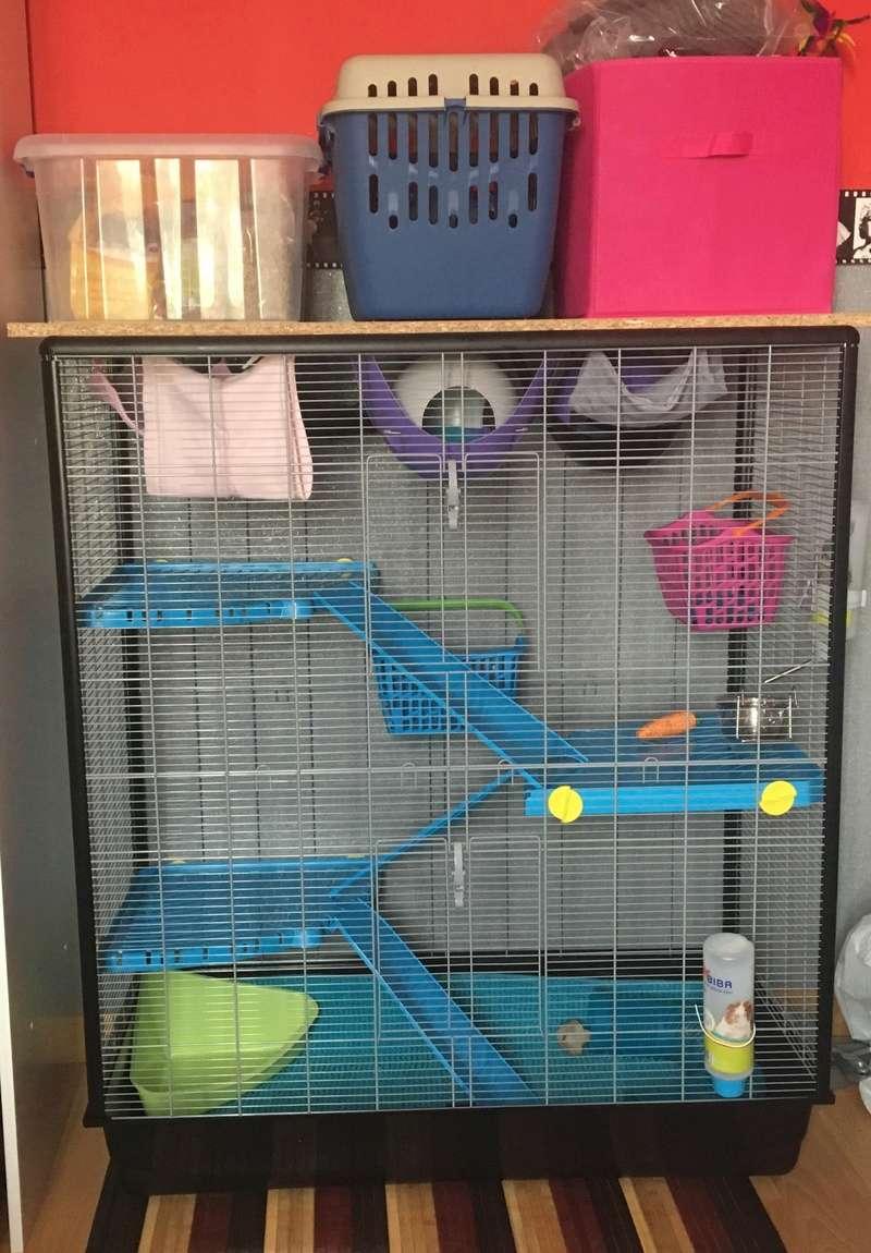 Photos de vos cages - Page 6 Image39