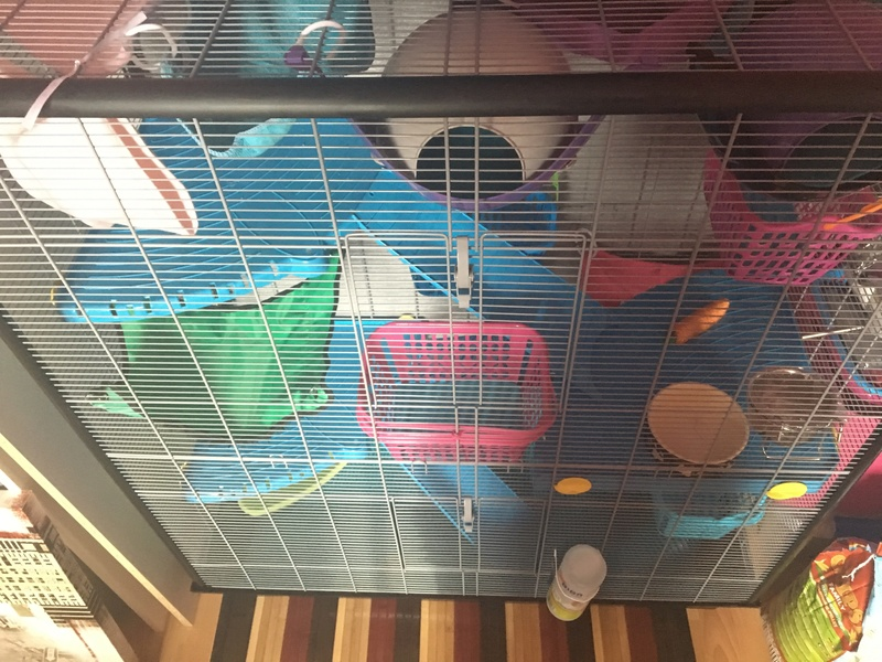 Photos de vos cages - Page 6 Image42