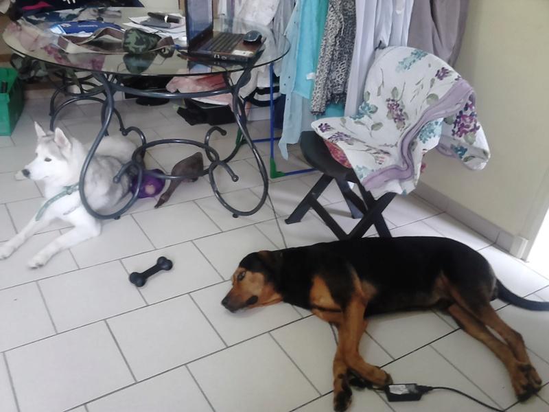 """dur dur d""""etre un chien  12110"""