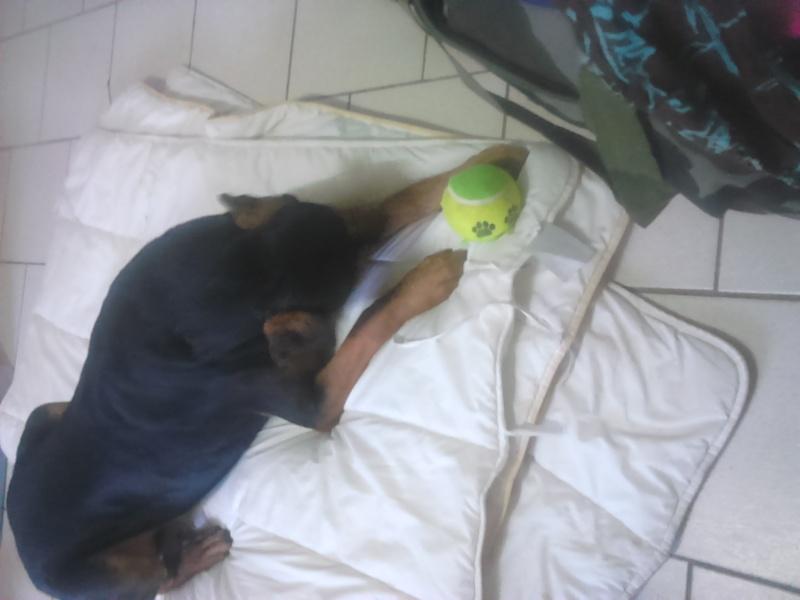 """dur dur d""""etre un chien  Dsc_0410"""