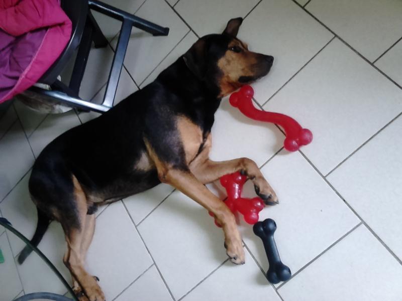 """dur dur d""""etre un chien  Dsc_0511"""