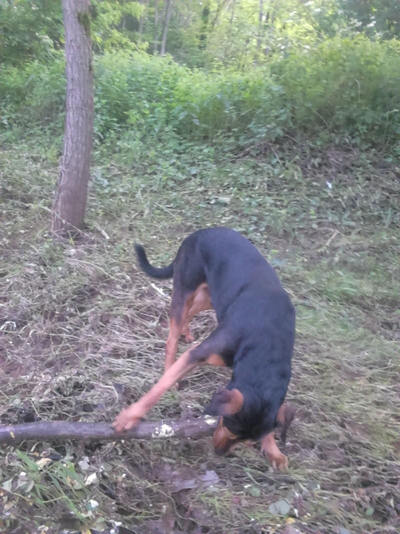 """dur dur d""""etre un chien  Dsc_0513"""