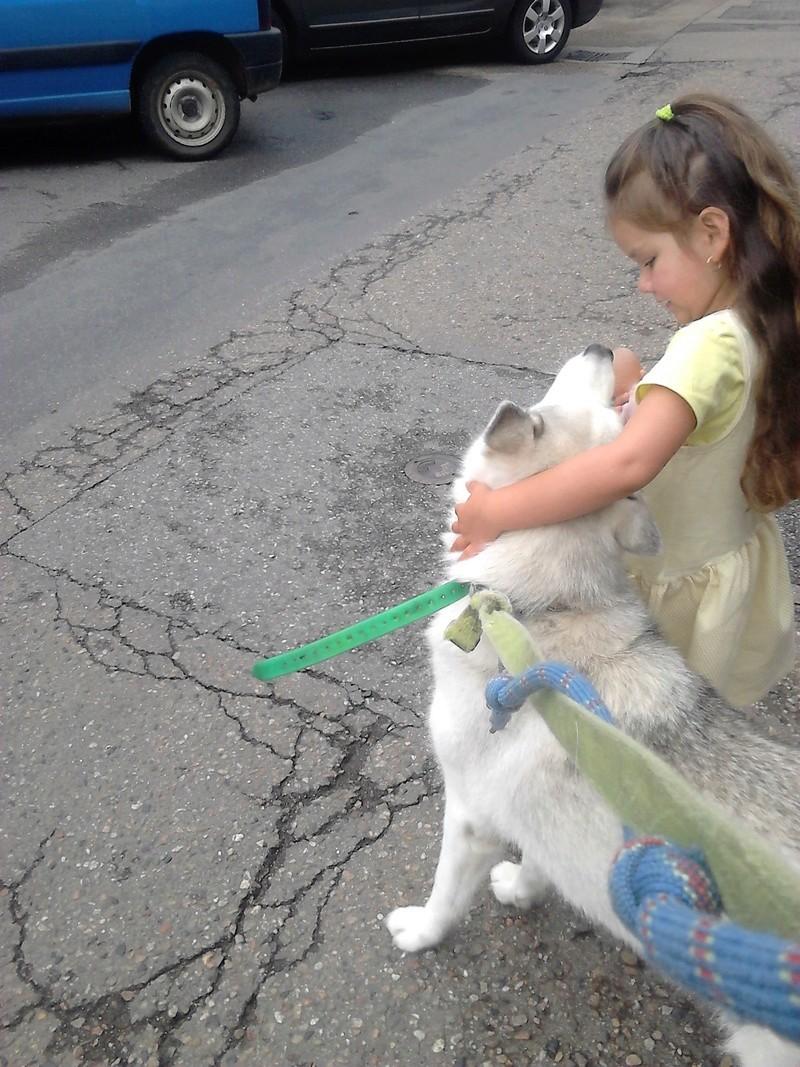 """dur dur d""""etre un chien  Dsc_0713"""