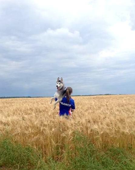 Laska-Moon, ma folie-douce (husky sibérien) - Page 4 26610