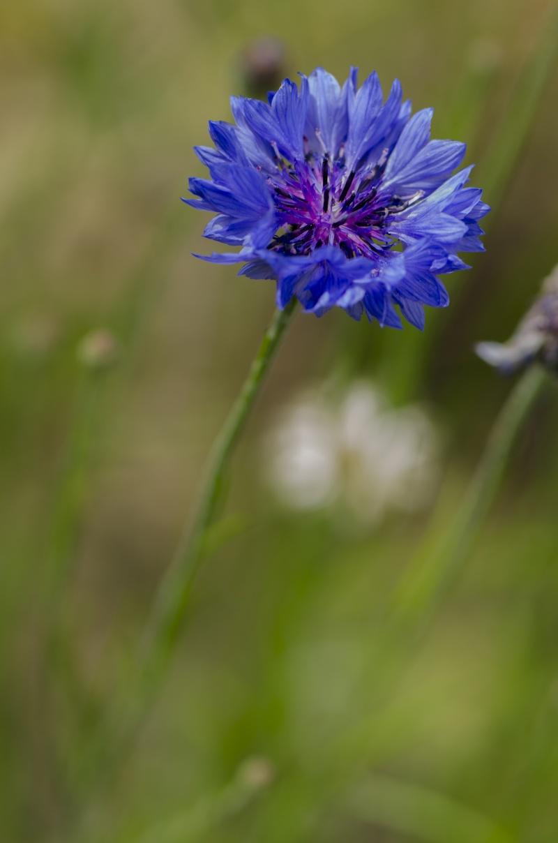 [Fil Ouvert] Fleurs Bleu-b10