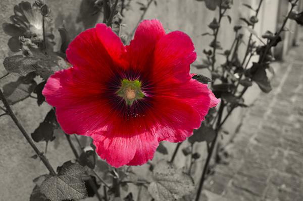 [Fil Ouvert] Fleurs - Page 20 Deisat10
