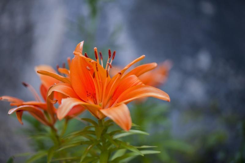 [Fil Ouvert] Fleurs Douce_10