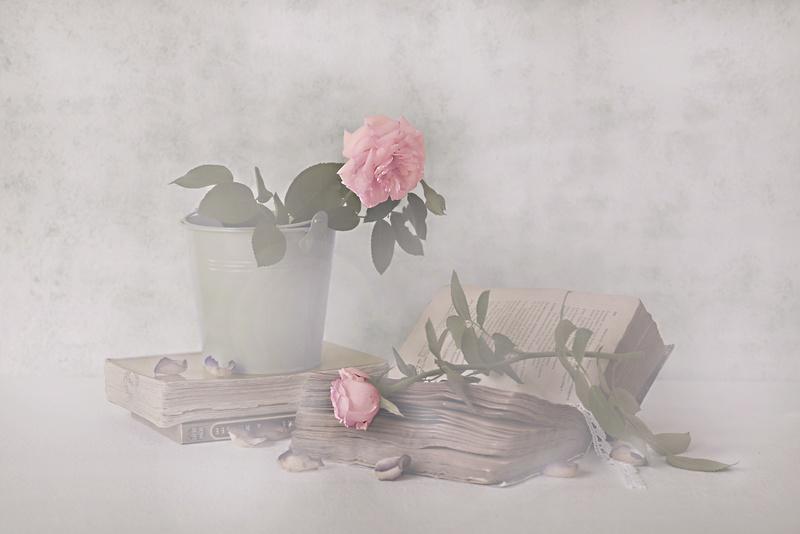 [Fil Ouvert] Fleurs - Page 20 Le_sea11