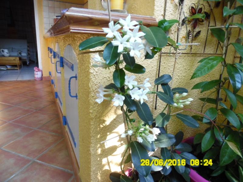 Plantes parfumées 2016 - Page 2 Sam_0720
