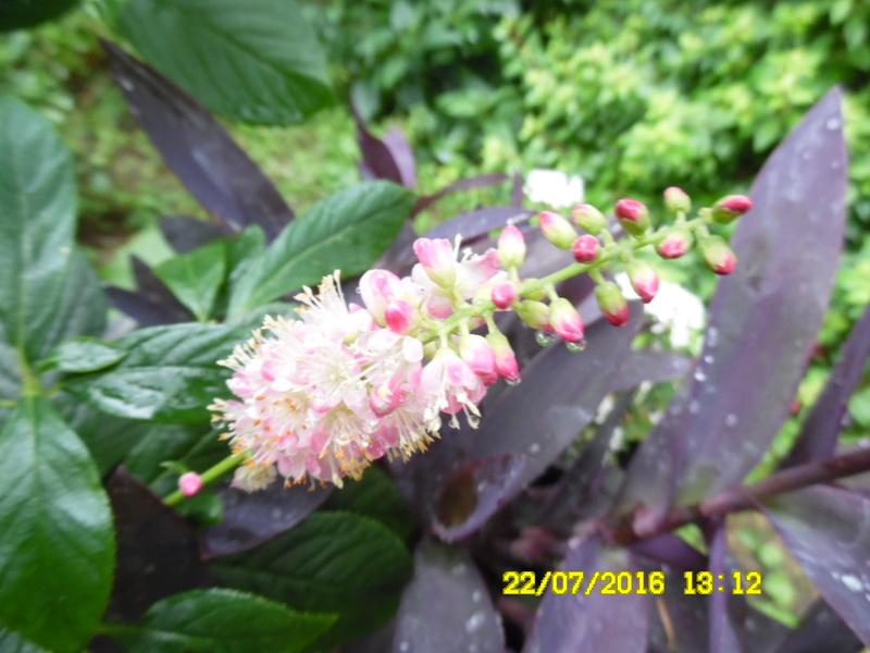 petits bouquets de juillet - Page 3 Sam_0777