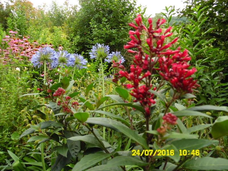 petits bouquets de juillet - Page 3 Sam_0784