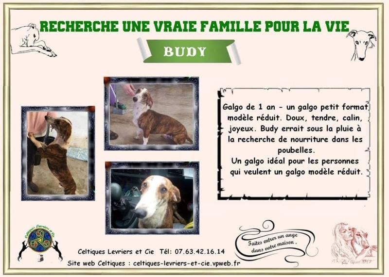 Budy - 1 an 13444513
