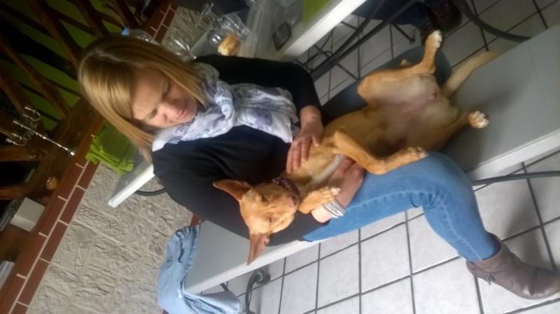 Jana - Podenca 7 mois - Dossier d'adoption en cours 13453111