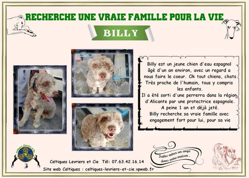 Billy - 3 ans (29) 13453610