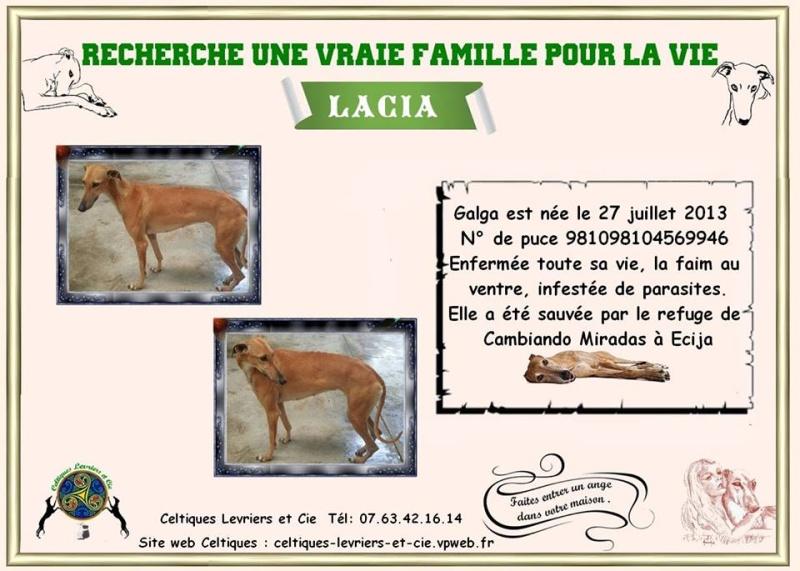 Lacia - galga - 2 ans 13459710