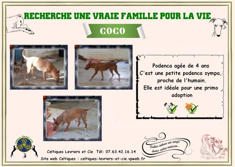 Coco 4 ans 13510410