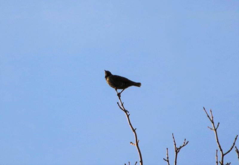Oiseau mystère Img_2112